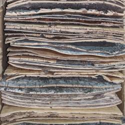 Birkebark ark 10 ' x 10'